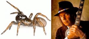 Myrmekiaphila neilyoungi and Neil Young