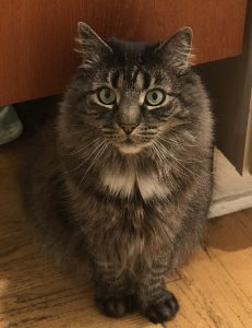Teddy the cat in April, 2018