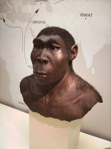 Homo erectus: master of fire and inventor of cooking