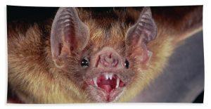A bat. How . . . lovely