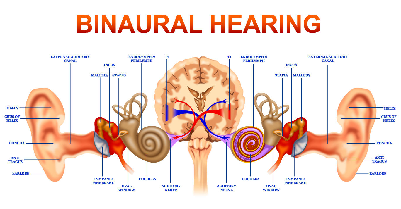 Binaural Hearing Diagram