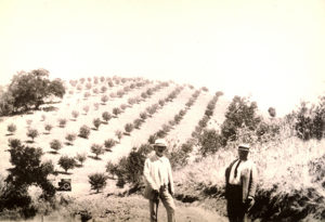 Paderewski (center) in his orchards, ca. 1915
